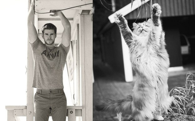 31 star sexy e 31 gattini che le imitano