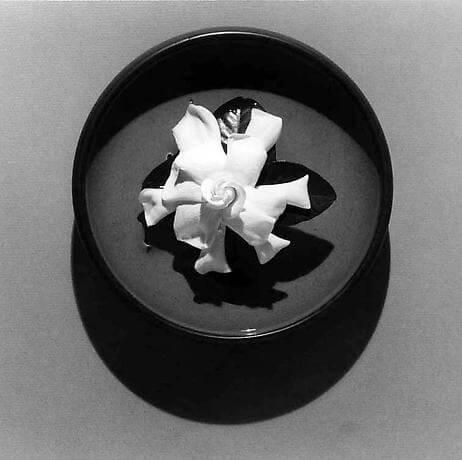 1978, Gardenia, 1978