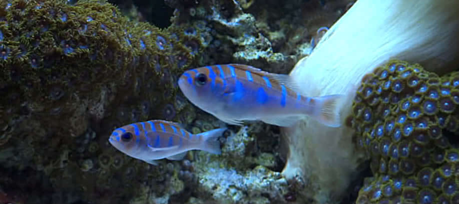 pesce_gender